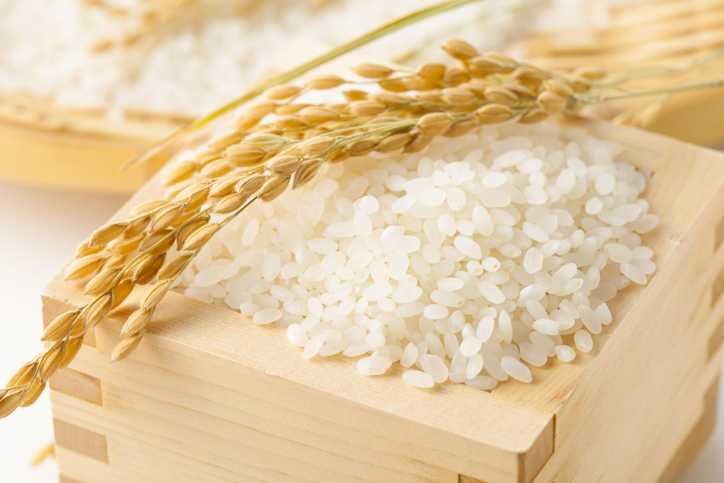 玄米白米比較