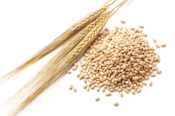 大麦ダイエット